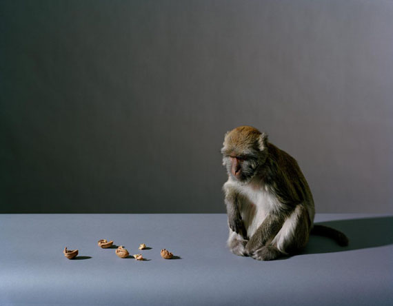 Olivier Richon: Portrait of a Monkey, 2008, C-type analogue, 93 cm x 70 cm, Edition 3/5