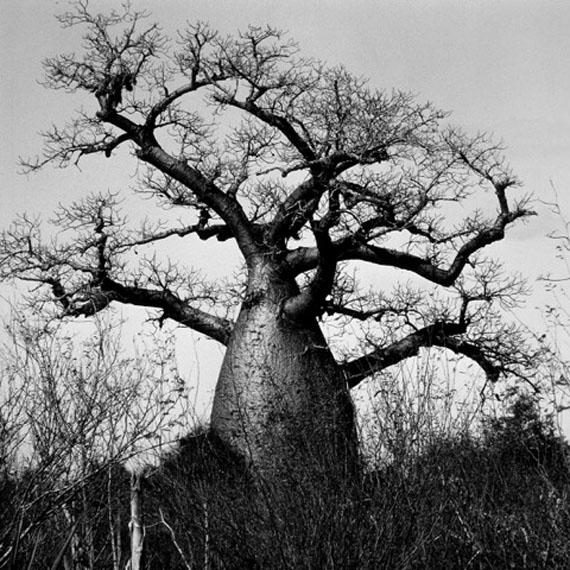 Beat Presser: Baobab Adansonia © Beat Presser