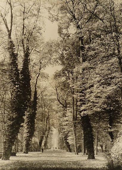 Max Baur. Sanssouci: Hauptallee, nach 1934Vintage, Silbergelatineabzug auf Leonar Seidenmattpapier, 38,7 x 28 cm© Lichtbild-Archiv Max Baur / Sammlung M.-L. Surek-Becker