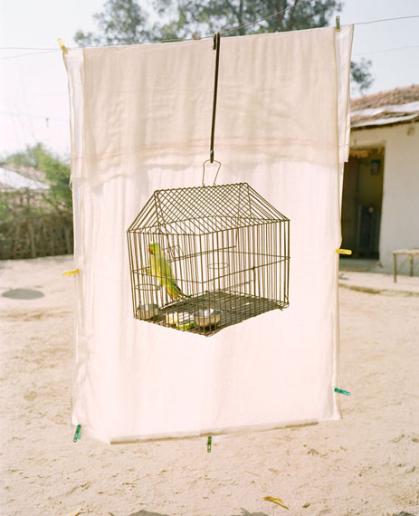 Lovebird, 2016, From the series A Myth of Two Souls, 2013 - ongoing © Vasantha Yogananthan