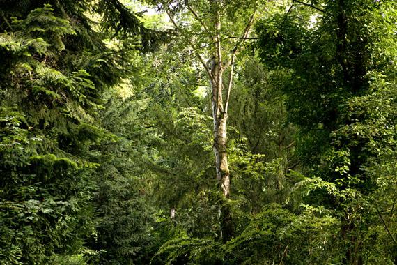 Ellen Bornkessel:  Embassy of Trees #6