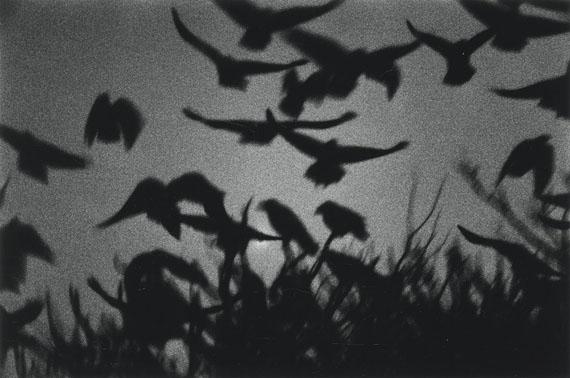 """Lot 4179Masahisha Fukase""""Kanagawa"""" (from 'The Solitude of Ravens'). 1978Later gelatin silver print 2008"""
