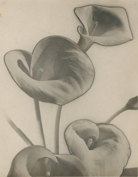99MAN RAY (Emmanuel RADNITSKY, dit) (1890-1976)« Calla Lilies », solarisation, 1930Tirage argentique d'époque, indications de parution au dos29,2 x 23 cm15 000 / 20 000 €