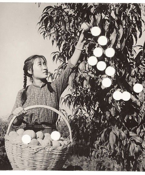 CAI DONGDONG   蔡东东