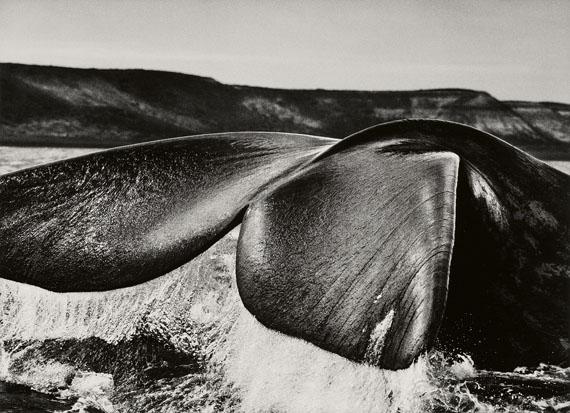 Sebastião SalgadoSouthern Right Whale, Patagonia, Argentina, 2004Gelatin silver print36.8 x 50.8 cm (50 x 60.1 cm)€ 9,000 – 12,000Lot 153 / Auction 1120 Photography