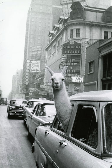 © Inge Morath / Magnum Photos, A Lama at Times Square, 1957.
