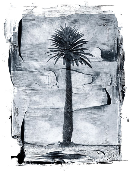 Palm Tree, St, John, Virgin Islands, 1988, INK