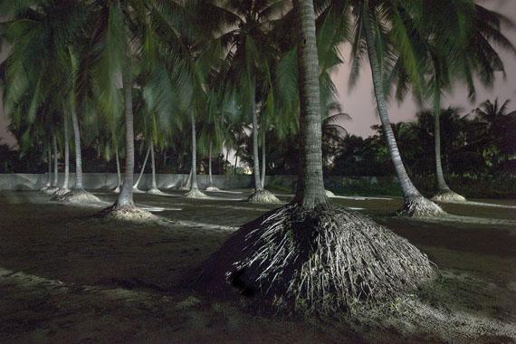 Francois Delebecque: Palmiers Bénin, 2015
