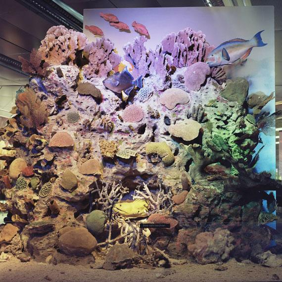 © Roselyne Titaud: Korallen – o. T., 2010