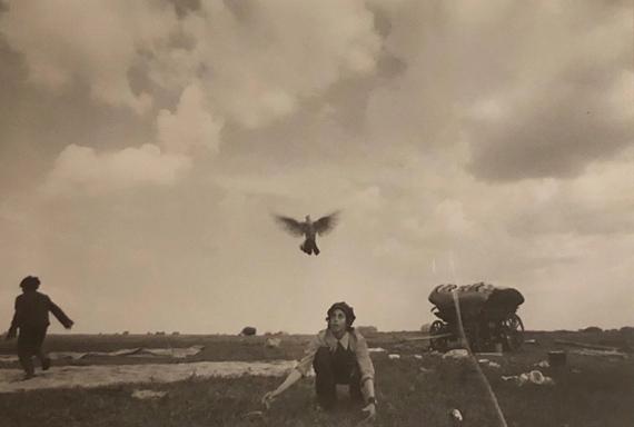 Ljalja Kuznetsova (Kazakhstan. b. 1946). Boy with Dove, Gypsy Series, Uralsk, 1979. Gelatin silver