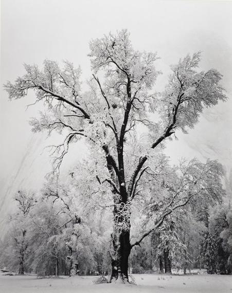 ANSEL ADAMS Oak Tree, Snowstorm, Yosemite National Park, California, 1948 Gelatin silver print