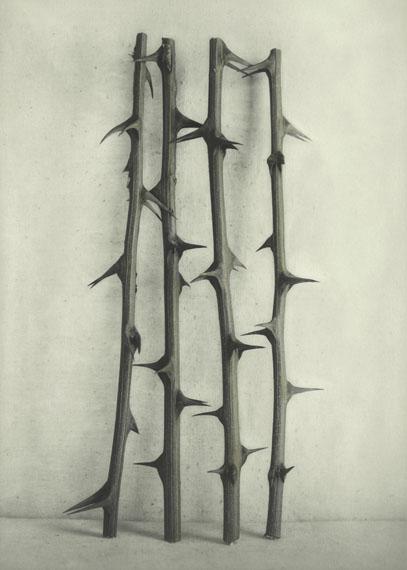 © Ingar Krauss