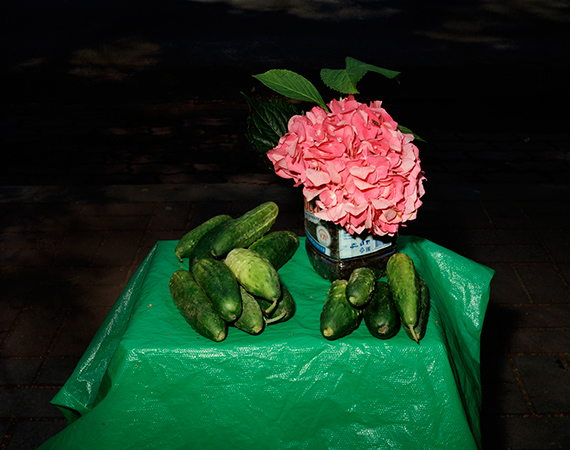 Stillleben mit Hortensie und Gurken from the series Morte 2016  © Lia Darjes