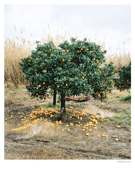 Eva Leitolf: Plantage, Rosarno, Italy, 2010, from the work Postcards from Europe, since 2006.