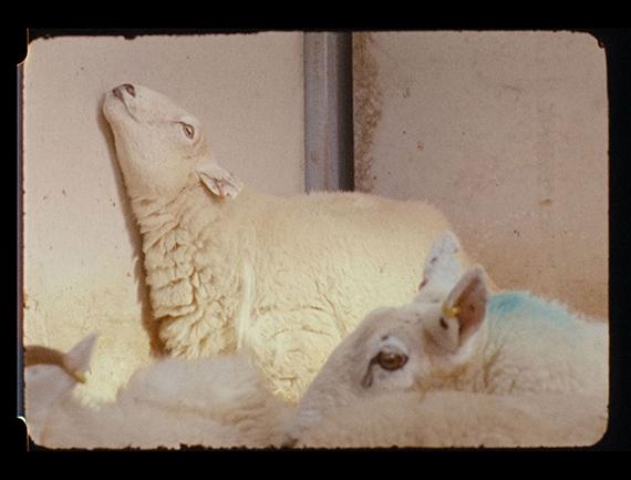 Nashashibi/Skaer, Lamb, 2019, film still