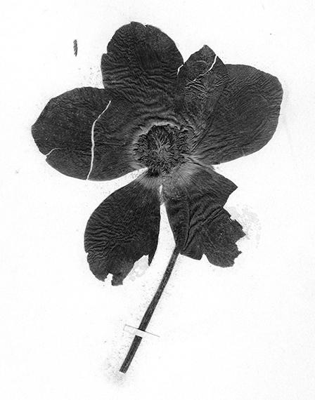 Terri Weifenbach, Politics of Flowers from Sequence 1 2005© GALERIE MIRANDA