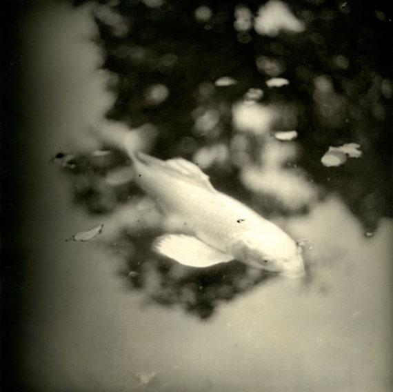 """Silver fish"", LE JARDIN DE NORIKO 2019 © Isa Marcelli"