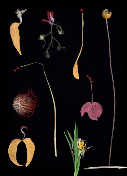 Luzia Simons: Blacklist 01, 2013, 40 x 29 cm, Edition of 6