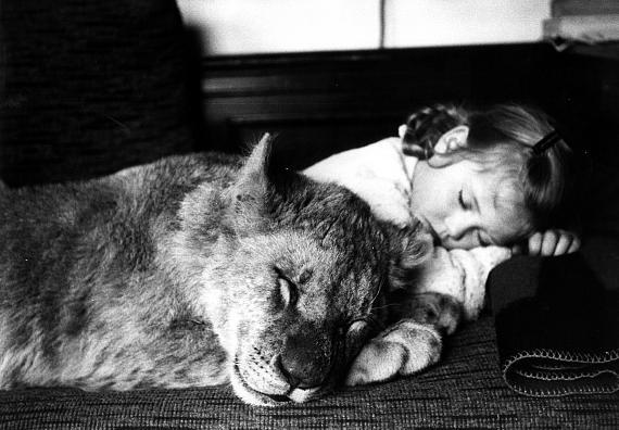 THE ANIMAL AND ITS HUMAN BEING / DAS TIER UND SEIN MENSCH