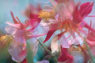 Peter Fischli / David Weiss Ohne Titel (Blume), 1997 Fotografie © 2008 Peter Fischli / David Weiss