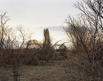 JOEL STERNFELDTHE FIELDS series:Looking North from a Cane Break, Near Walnut Trees Road, Towards Nook Road, on a Late March Afternoon, The Meadows, Northampton, Massachusetts, March 2007, 2007Digital C-Print, 182 x 228 cmcourtesy of the artist and Buchmann Galerie, Berlin