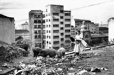 Stefan Moses© Courtesy Stefan MosesMüllschweine, Rio de Janeiro, Brasilien, 1959