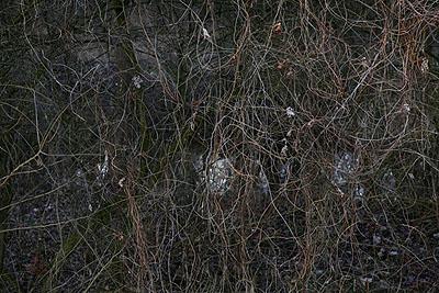 Emanuel Raab, Winterwald #6, 2007, Fine Art Pigment Print, 44 x 60 cm