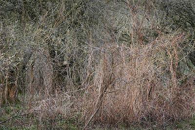 Emanuel Raab, Winterwald #18, 2008, Fine Art Pigment Print, 44 x 60 cm