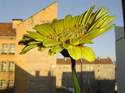 Maria Sewcz Aus: schnitt-blume topf-pflanze Berlin 2002–2004 41 x 55 cm, Inkjet-Print  © Maria Sewcz / VG Bild-Kunst 2008