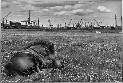 Newcastle on Tyne, England 1978 @Martine Franck Magnum Photos