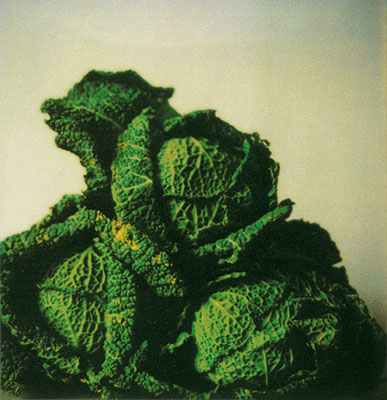 Cy Twombly, Green Cabbages, Gaeta, 1998 © Cy Twombly / Schirmer/Mosel 2008