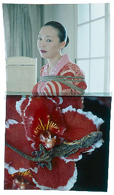 Hana Kinbaku 2008 © Nobuyoshi Araki courtesy Michael Hoppen Contemporary C-type Print 130 x 170 cmIn an edition of 1, each sold with individual transparency