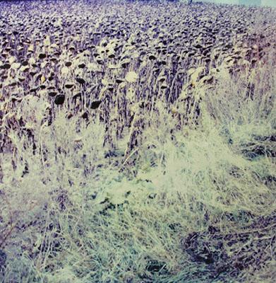Knut Wolfgang Maron, aus: Bilder über Landschaft, 2005/07