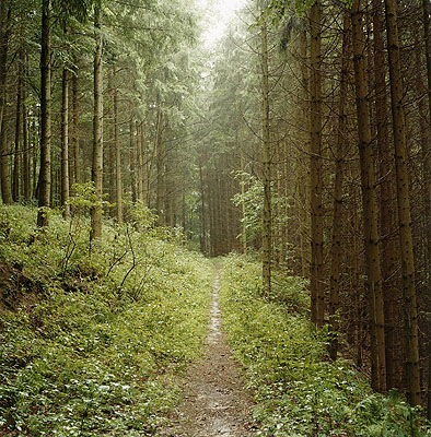 Waldweg, Helfenberg-Bauernberg, 2006