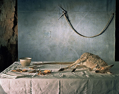 Wallaby with tarp, 2006, archival print on cotton rag paper