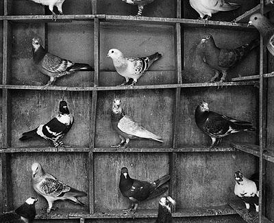 Pigeon roost, Vrindavan, India © Fazal Sheikh 2009