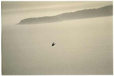 MASAO YAMAMOTOKawa=Flow, #1530, printed 2008Art size: 6.5 x 9.6 inches. Frame size: 16 x 20 inches.All gelatin silver prints Edition of 20