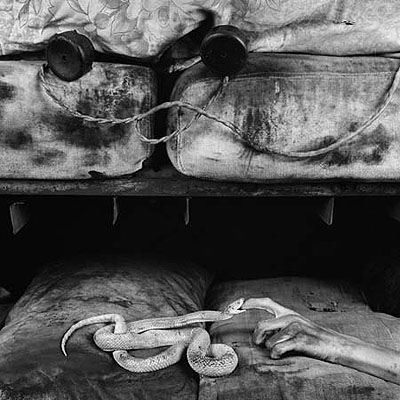 Roger Ballen, Boarding House, Bite, 2007, courtesy of Hamiltons Gallery