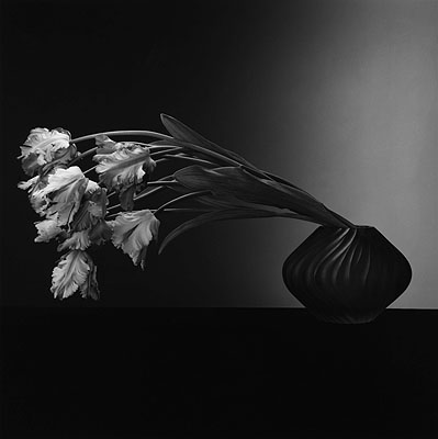 Robert Mapplethorpe: ParrotTulips, 1988 © 2010 Robert Mapplethorpe Foundation