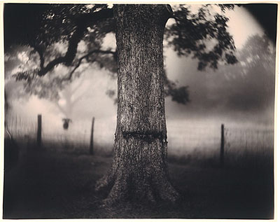 Sally Mann, Scarred Tree. De la série « Deep South », 1996  © Sally Mann. Courtesy Gagosian Gallery, New York