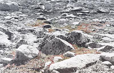 Iris Hutegger, Landschaft Nr. 09-12-41, 2009, analoge Fotografie, benäht, 49 x 76 cm. Foto: © Hutegger