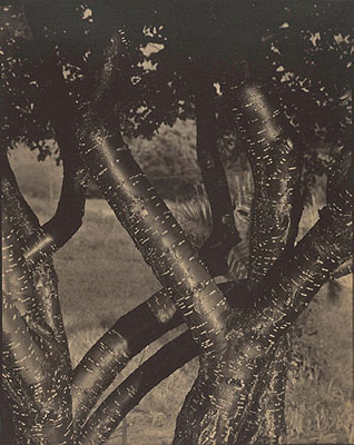 Alfred Stieglitz Dancing trees 1921–22 palladium photograph, 24.2 x 19.3 cm Metropolitan Museum of Art, New York Gift of David A Schulte 1928© Alfred Stieglitz Estate