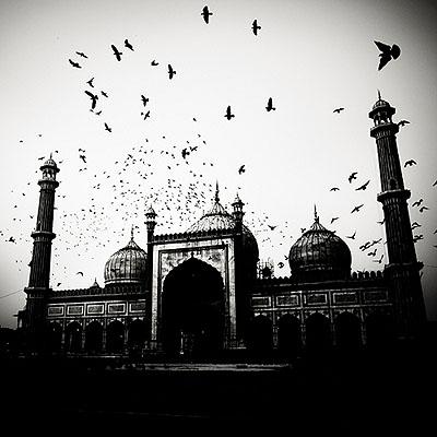 © Josef Hoflehner, Mosque and Birds - India