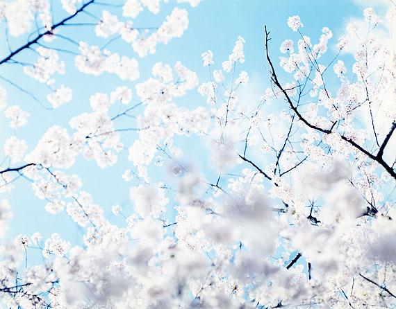 Risaku Suzuki, Sakura 07, 4-93 2007 C-prints 120 x 155 cm Courtesy Gallery Koyanagi, Tokyo, Japan