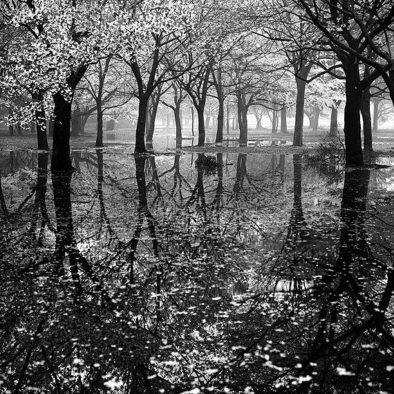 Toshio Enomoto, Cherry Tree Woods in Yoyogi Park after a Spring Storm, Tokyo, 1994 Barietdruk / Gelatin silver print 40 x 50 cm Huis Marseille, Amsterdam Image courtesy Galerie Wouter van Leeuwen, Amsterdam