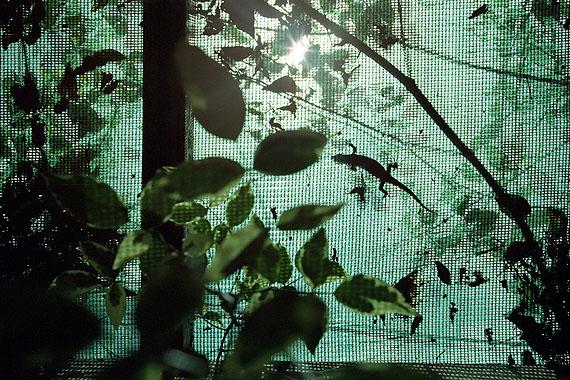 """© Christoph Siegert: Sunroof gecko 1°12'58.97""""S  36°48'17.76""""E"""