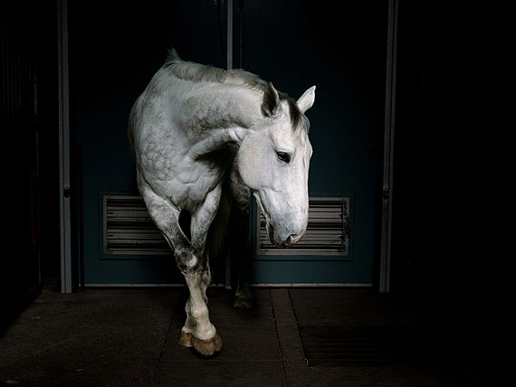 Charlotte Dumas. Jonker, 2002 Four Horses