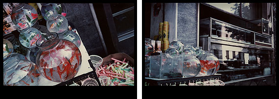 EVE SONNEMANGOLDFISH, ATHENS, 1977diptych photographs on Cibachrome paper20 x 30 in. 50.8 x 76.2 cm