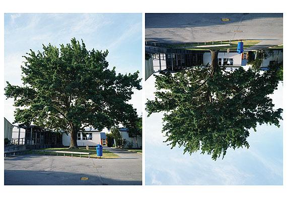 Ann SheltonSeedling, Lovelock's 'Hitler-Oak', Timaru Boys High School, New ZealandC PrintDimensions Variable2005-2010