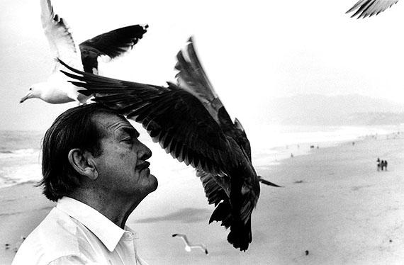 © Just Loomis, Birdman